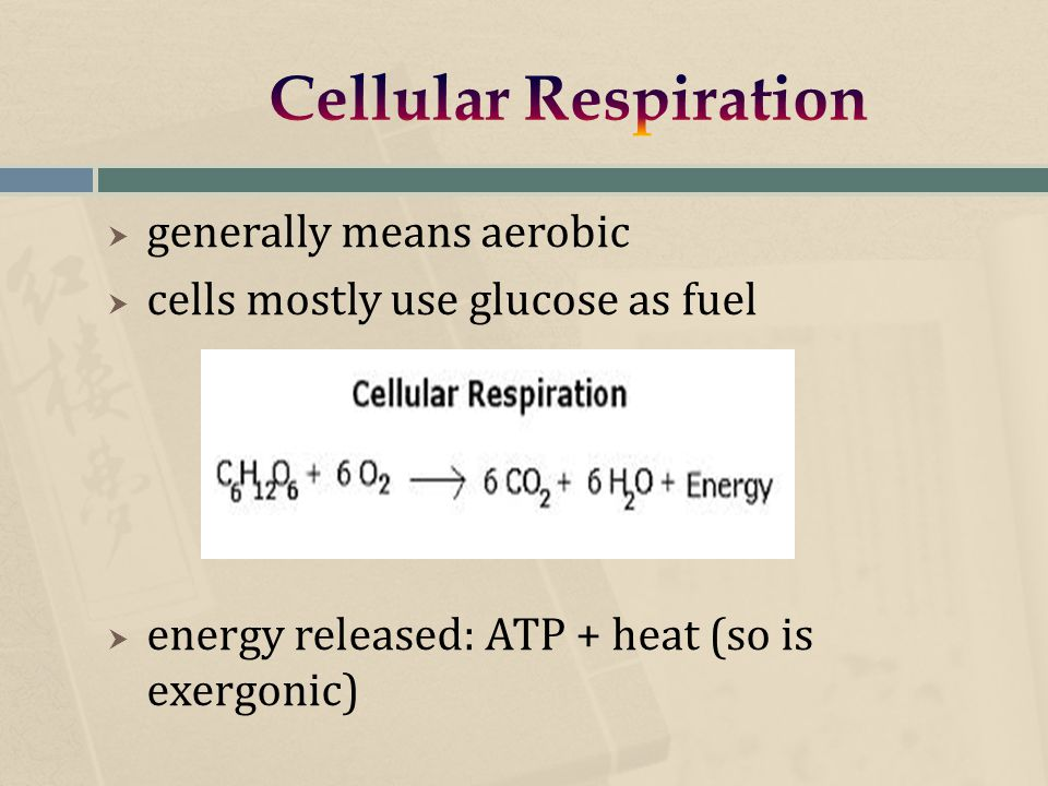  generally means aerobic  cells mostly use glucose as fuel  energy released: ATP + heat (so is exergonic)