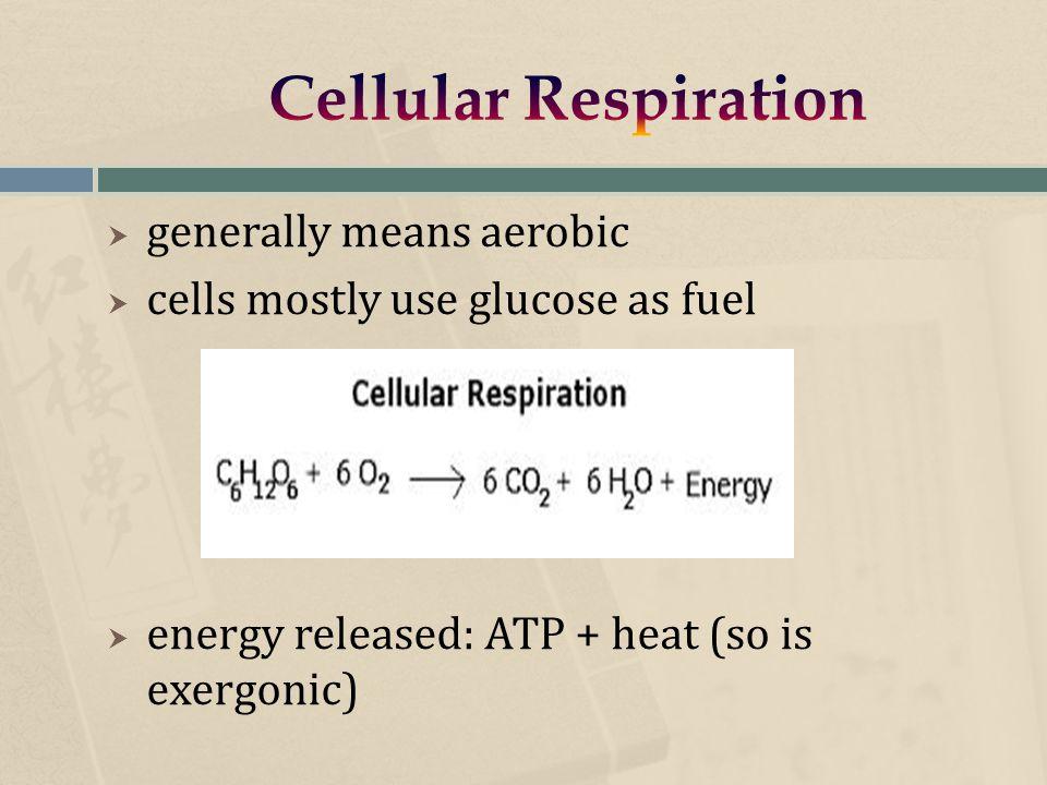  oxidative phosphorylation yields up to 16x more ATP/glucose molecule