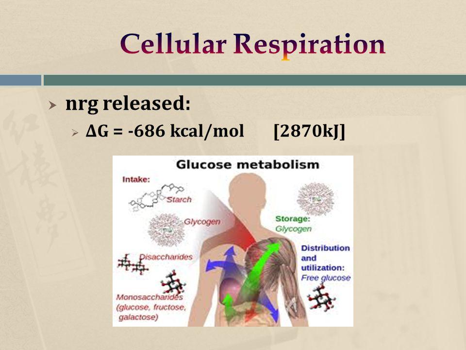  nrg released:  ΔG = -686 kcal/mol [2870kJ]