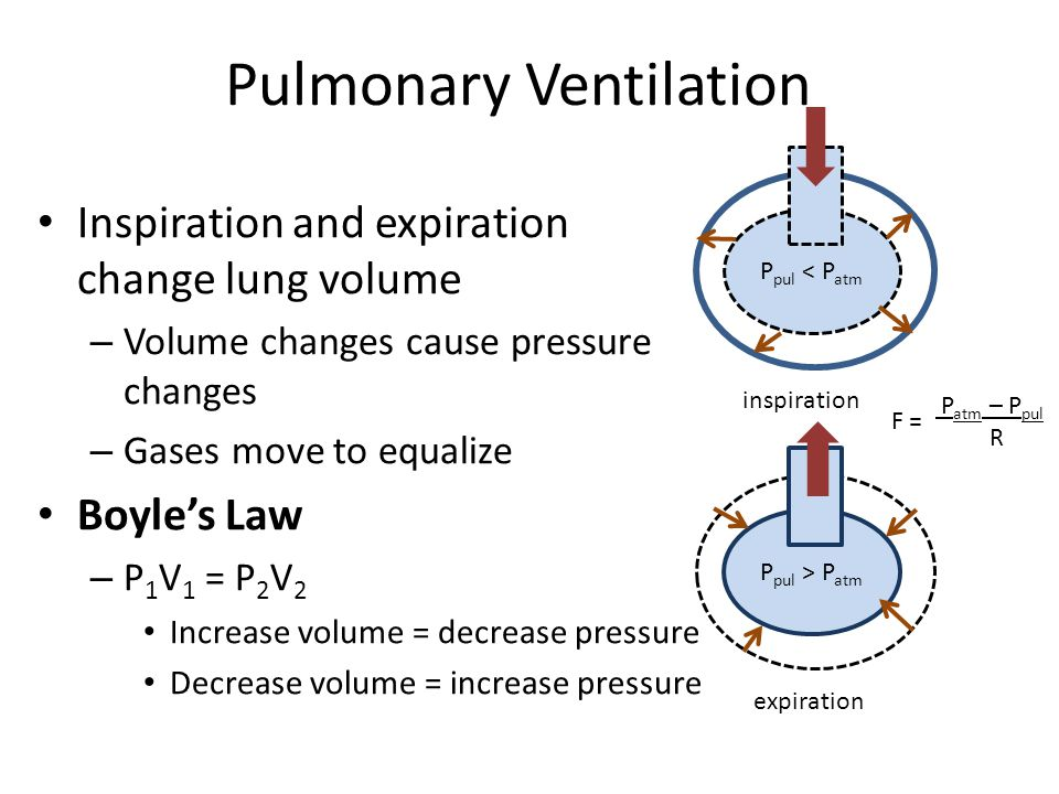 Pulmonary Ventilation Inspiration and expiration change lung volume – Volume changes cause pressure changes – Gases move to equalize Boyle's Law – P 1