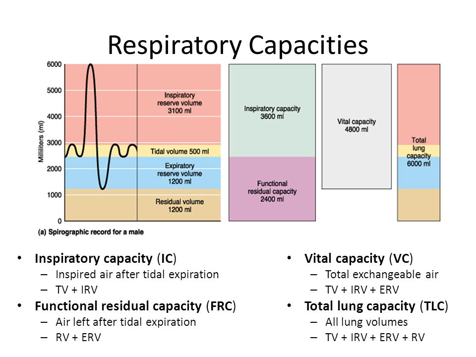 Respiratory Capacities Inspiratory capacity (IC) – Inspired air after tidal expiration – TV + IRV Functional residual capacity (FRC) – Air left after