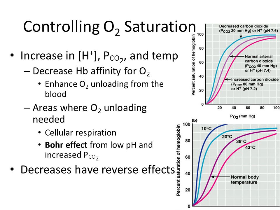 Increase in [H + ], P CO 2, and temp – Decrease Hb affinity for O 2 Enhance O 2 unloading from the blood – Areas where O 2 unloading needed Cellular r
