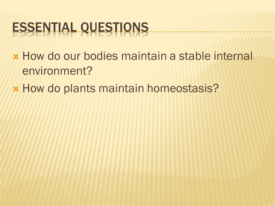  How do our bodies maintain a stable internal environment?  How do plants maintain homeostasis?