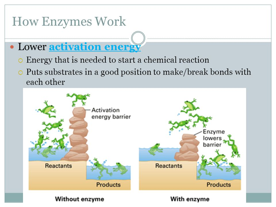 How Enzymes Work Lower activation energy  Energy that is needed to start a chemical reaction  Puts substrates in a good position to make/break bonds