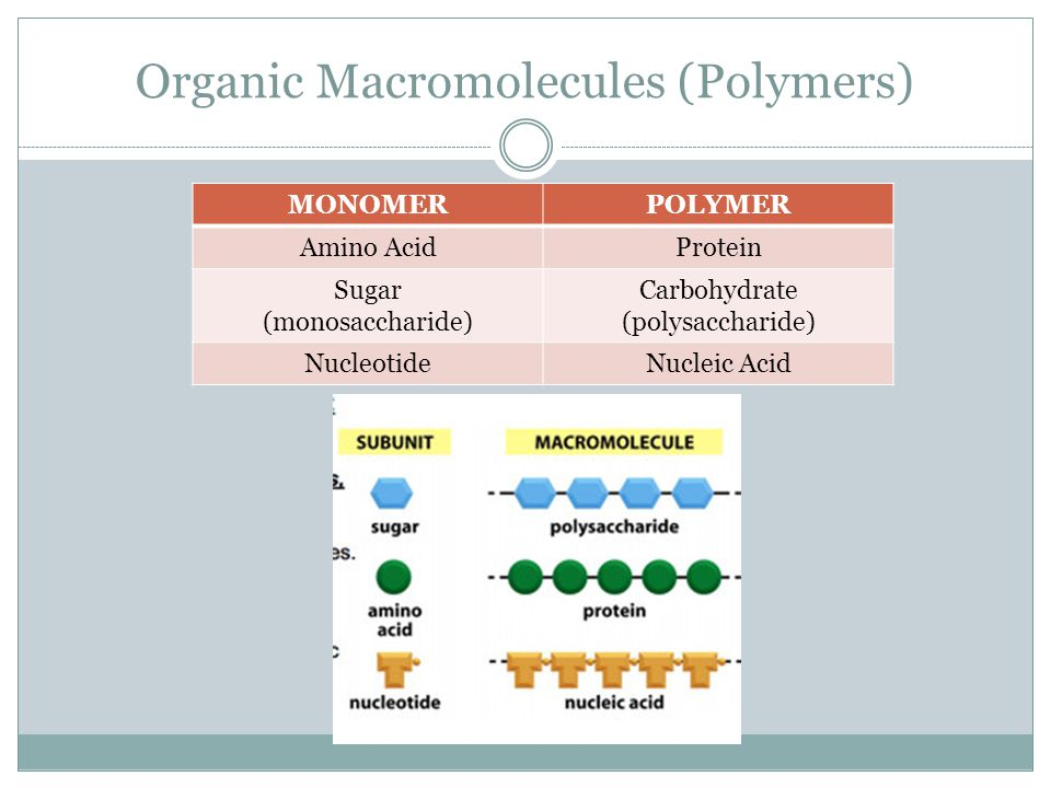 Organic Macromolecules (Polymers) MONOMERPOLYMER Amino AcidProtein Sugar (monosaccharide) Carbohydrate (polysaccharide) NucleotideNucleic Acid