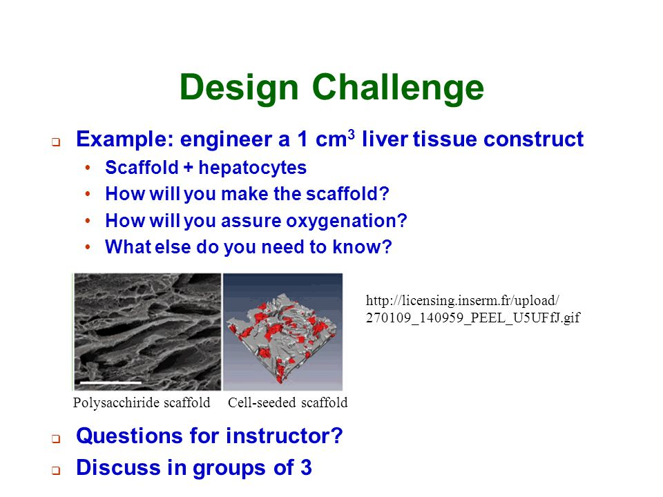 Design Challenge  Example: engineer a 1 cm 3 liver tissue construct Scaffold + hepatocytes How will you make the scaffold? How will you assure oxygen