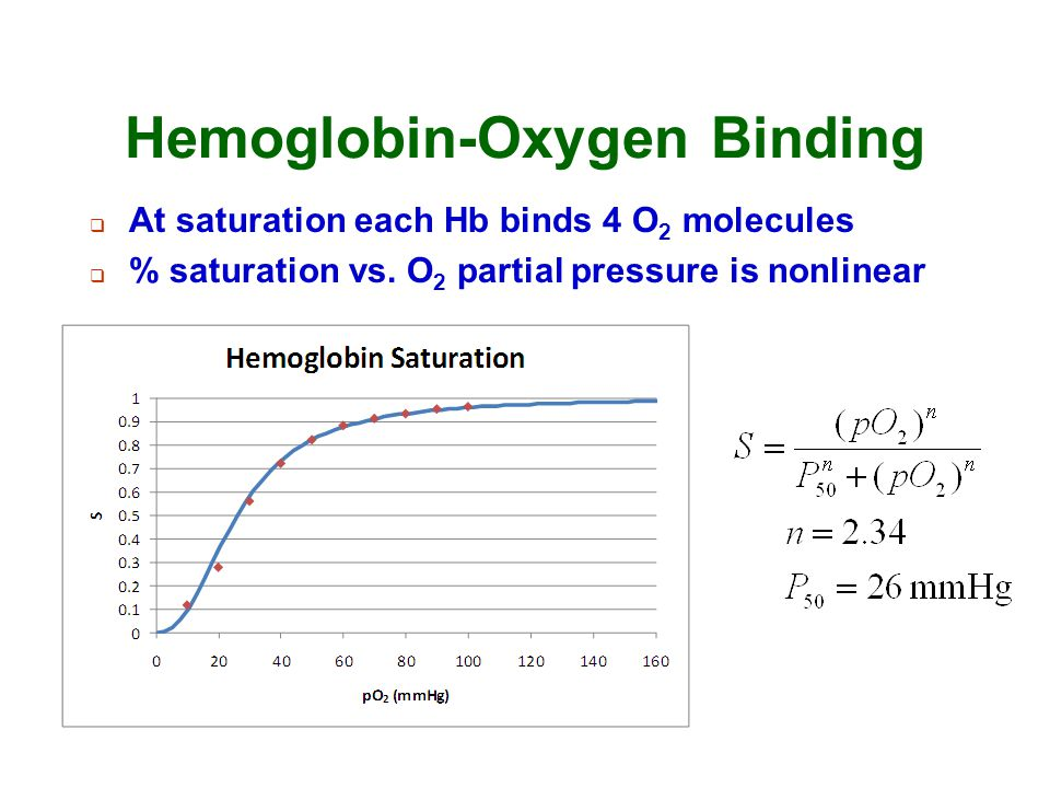 Hemoglobin-Oxygen Binding  At saturation each Hb binds 4 O 2 molecules  % saturation vs. O 2 partial pressure is nonlinear