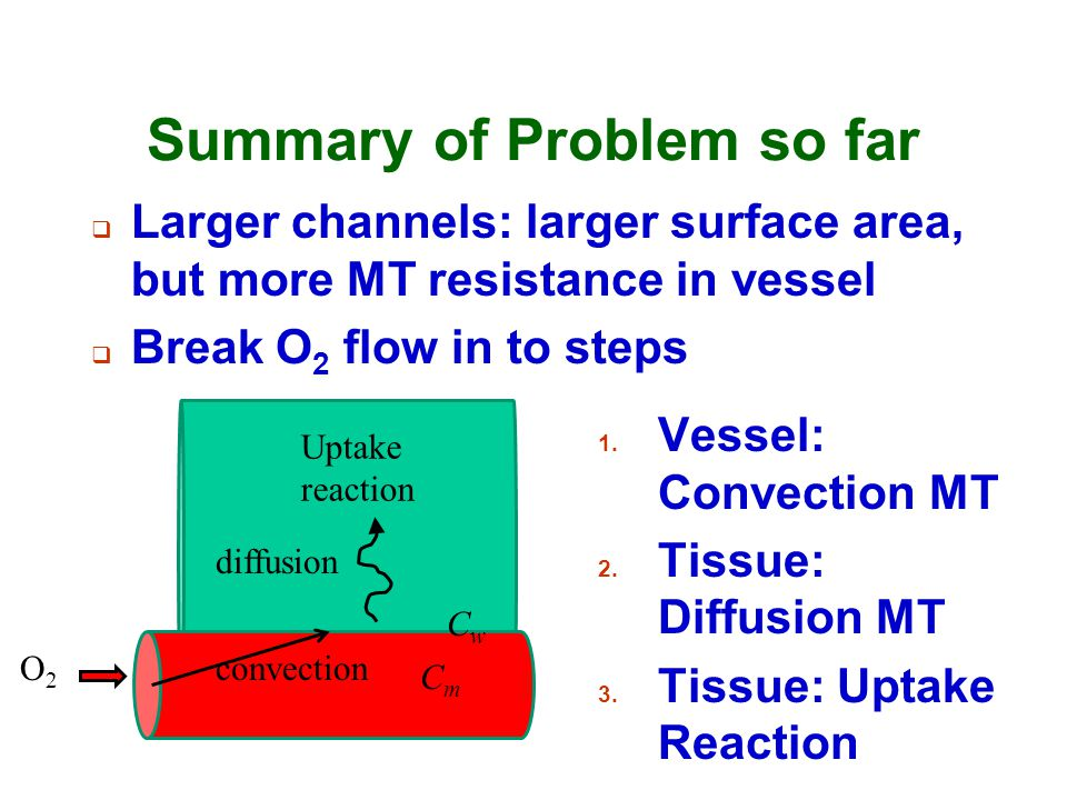Summary of Problem so far  Larger channels: larger surface area, but more MT resistance in vessel  Break O 2 flow in to steps O2O2 convection diffus
