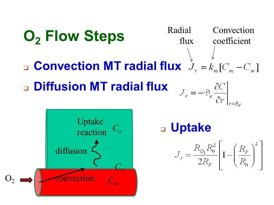 O 2 Flow Steps  Convection MT radial flux O2O2 convection diffusion Uptake reaction CmCm CwCw  Diffusion MT radial flux CoCo  Uptake Radial flux Co
