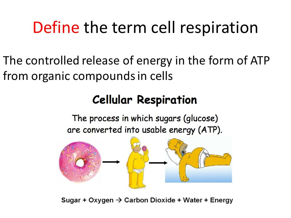 Explain how adenosine diphosphate can gain and lose a phosphate molecule The ATP molecule acts as a chemical battery , storing energy when it is not needed, but able to release it instantly when the body requires it.