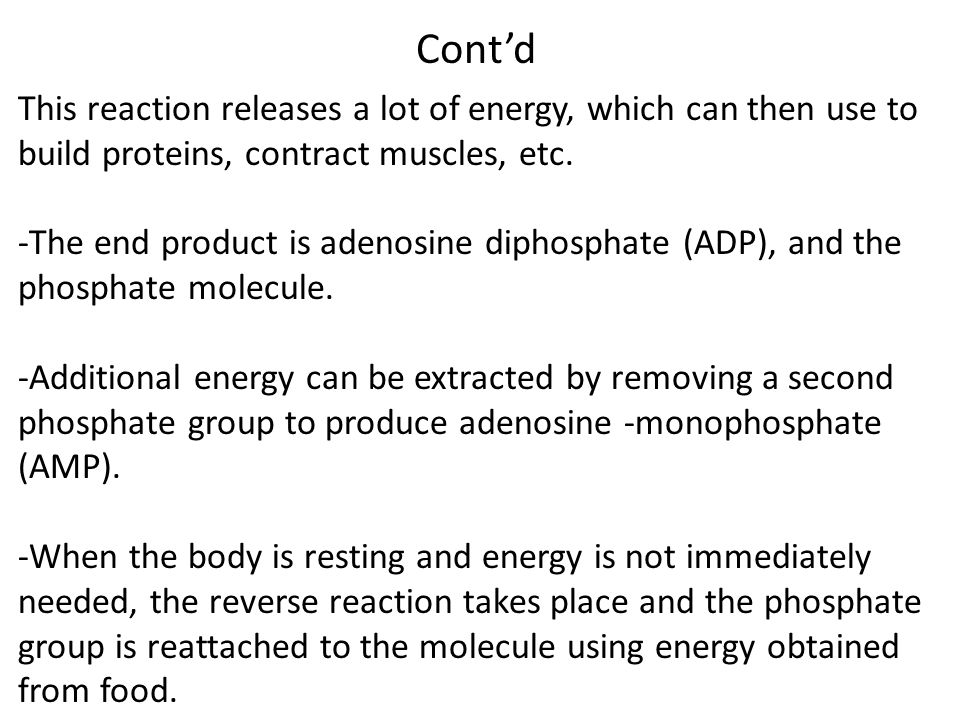 Explain the role of ATP in muscle contraction Phosphorylation of a protein = a conformational change in that protein Skeletal muscle structure (review)