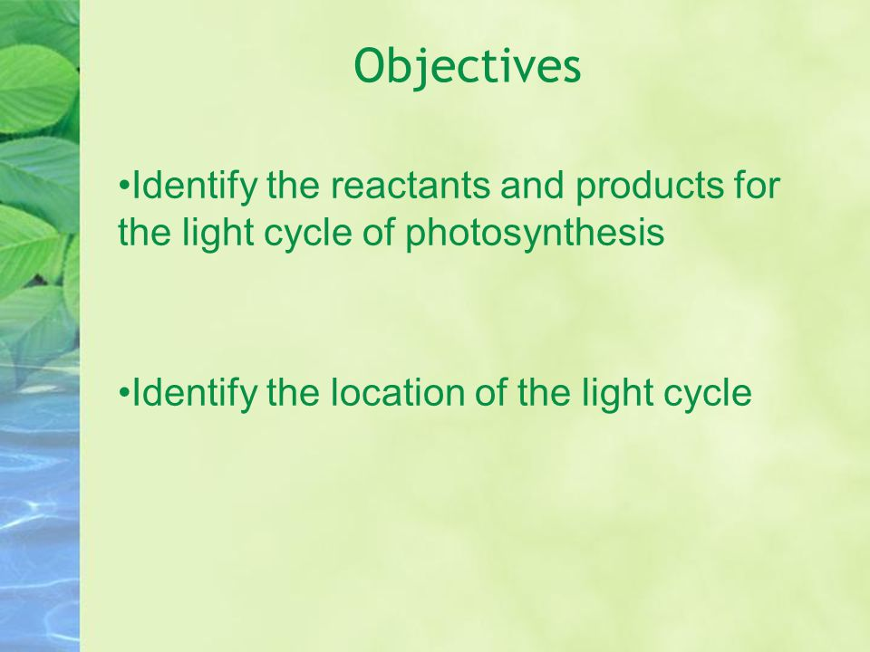 Objectives Identify the reactants and products for the light cycle of photosynthesis Identify the location of the light cycle