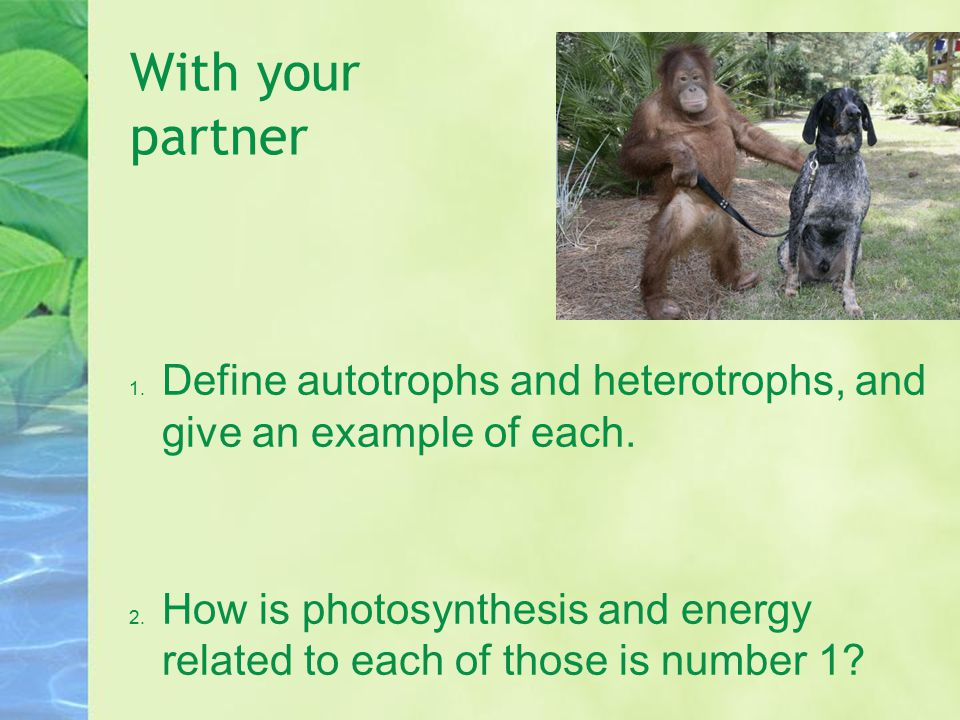 With your partner 1. Define autotrophs and heterotrophs, and give an example of each. 2. How is photosynthesis and energy related to each of those is