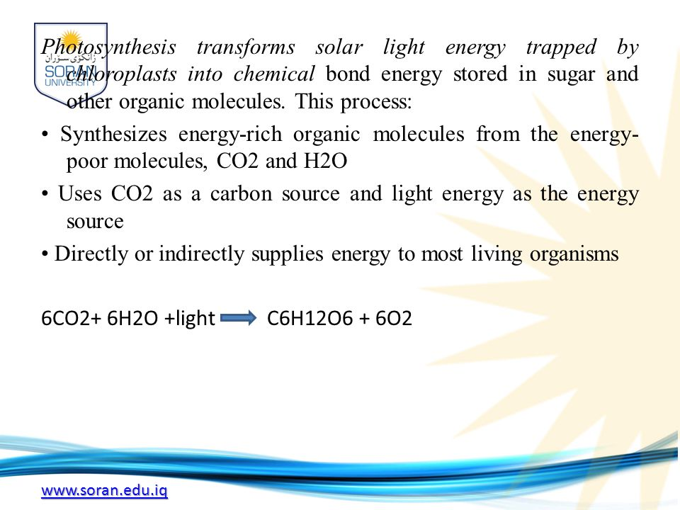 www.soran.edu.iq Photosynthesis transforms solar light energy trapped by chloroplasts into chemical bond energy stored in sugar and other organic molecules.