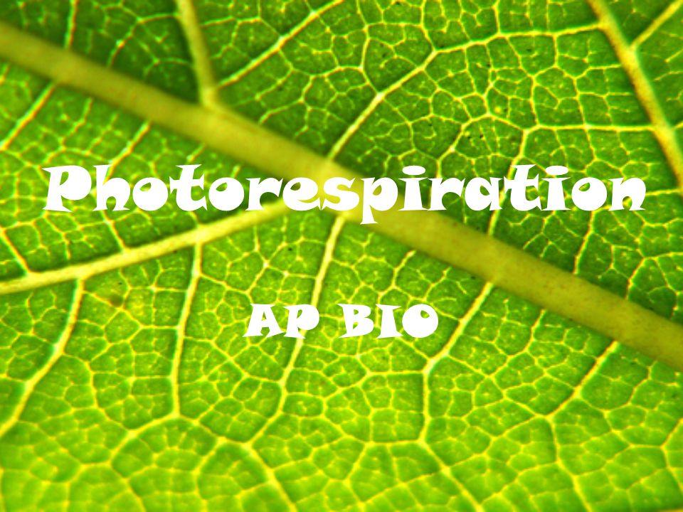 Photorespiration AP BIO