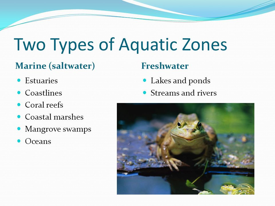 Two Types of Aquatic Zones Marine (saltwater) Freshwater Estuaries Coastlines Coral reefs Coastal marshes Mangrove swamps Oceans Lakes and ponds Streams and rivers
