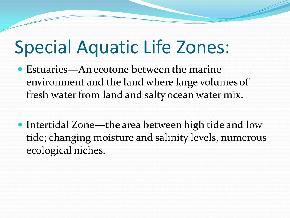 Special Aquatic Life Zones: Estuaries—An ecotone between the marine environment and the land where large volumes of fresh water from land and salty ocean water mix.
