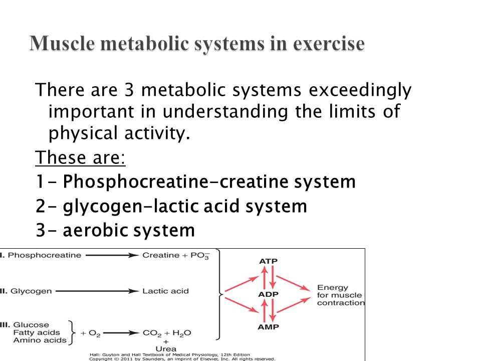 There are 3 metabolic systems exceedingly important in understanding the limits of physical activity. These are: 1- Phosphocreatine-creatine system 2-