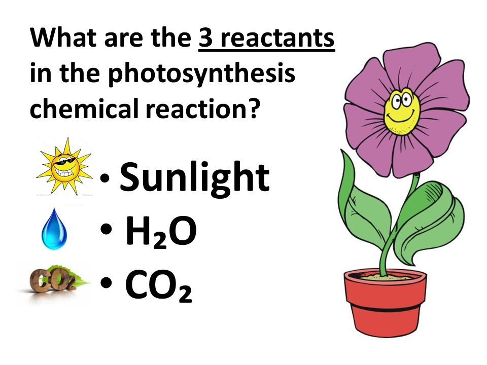 Sunlight H₂O CO₂ What are the 3 reactants in the photosynthesis chemical reaction?