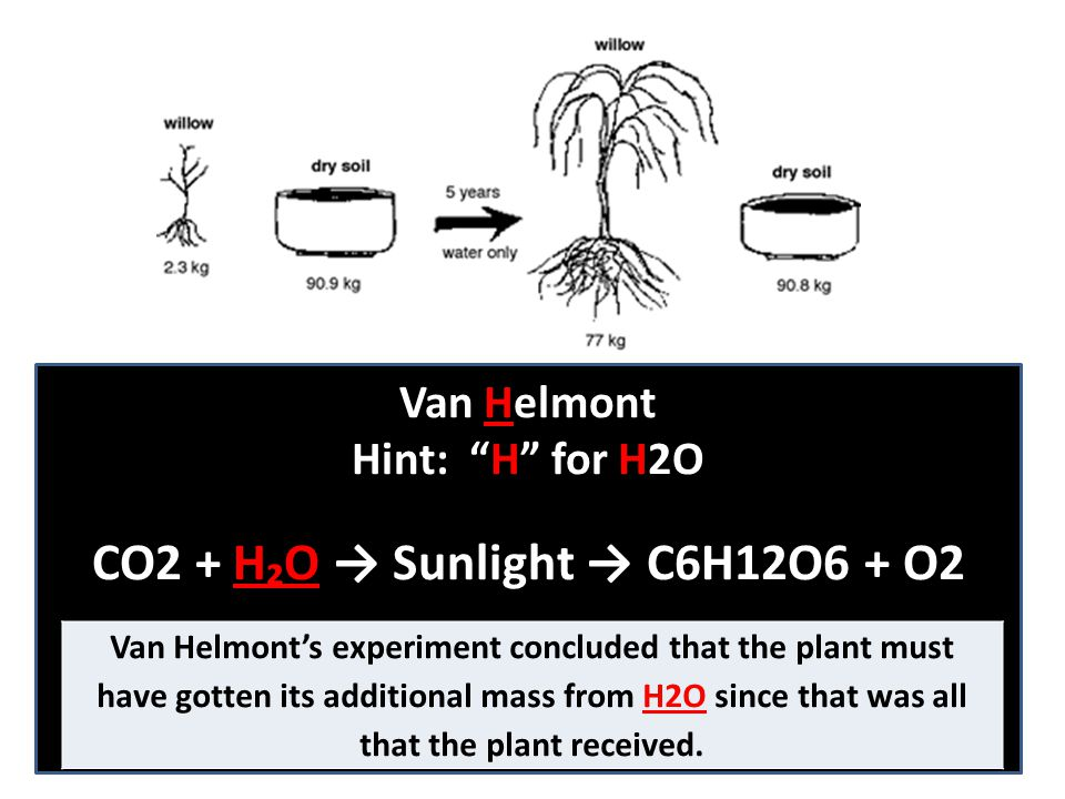 "Van Helmont Hint: ""H"" for H2O CO2 + H₂O → Sunlight → C6H12O6 + O2 Van Helmont's experiment concluded that the plant must have gotten its additional ma"