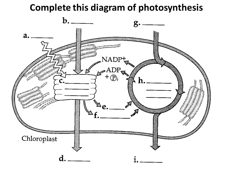 Complete this diagram of photosynthesis