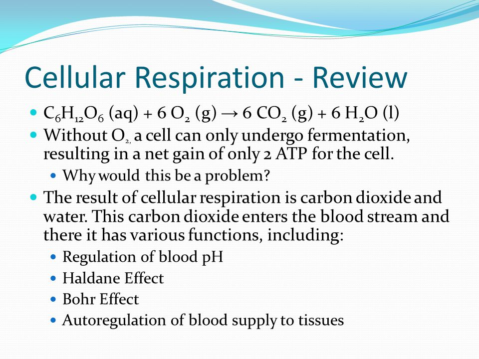 Respiratory System Primary function – Gas exchange: to obtain oxygen and remove carbon dioxide. Cells require oxygen to break down nutrients to releas