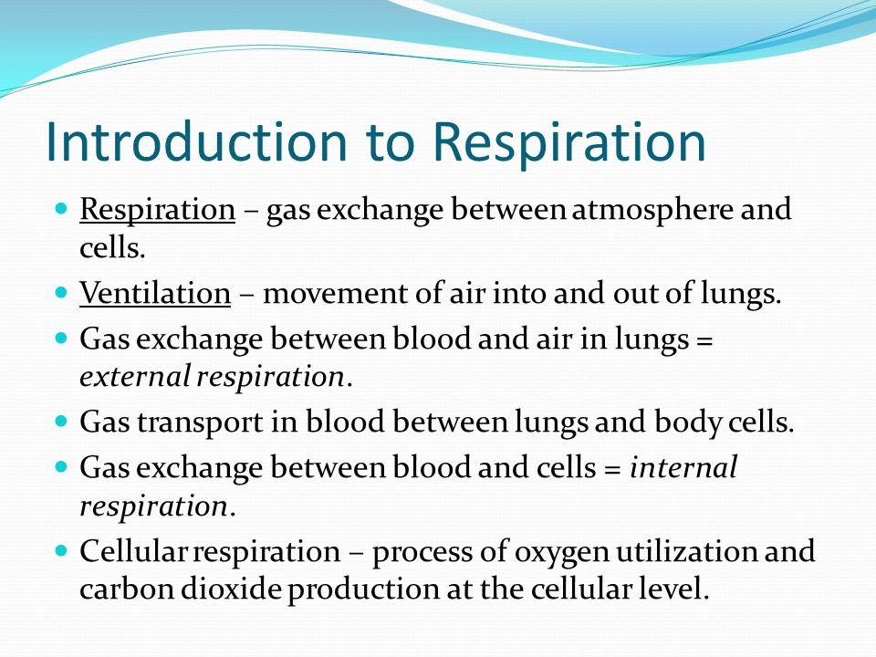 Cellular Respiration Therefore it is incredibly important that cellular respiration takes place, in a timely manner, throughout the body. When O2 leve
