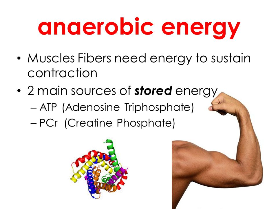anaerobic energy Muscles Fibers need energy to sustain contraction 2 main sources of stored energy – ATP (Adenosine Triphosphate) – PCr (Creatine Phos