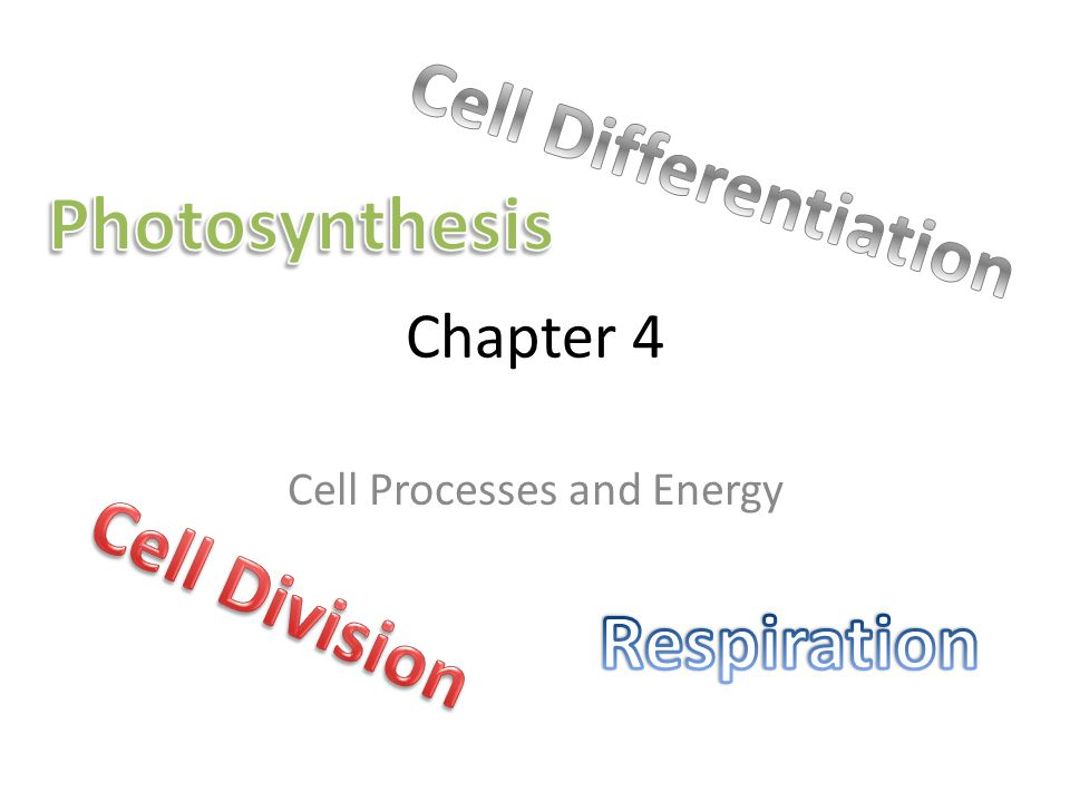 Chapter 4 Cell Processes and Energy
