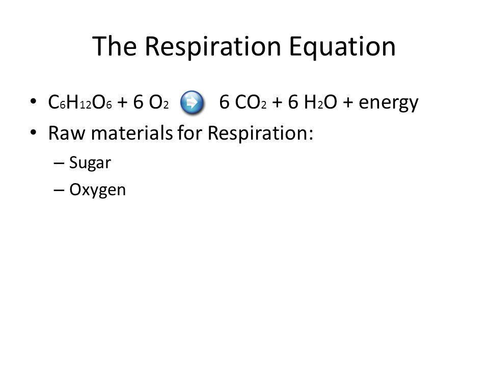 The Respiration Equation C 6 H 12 O 6 + 6 O 2 6 CO 2 + 6 H 2 O + energy Raw materials for Respiration: – Sugar – Oxygen