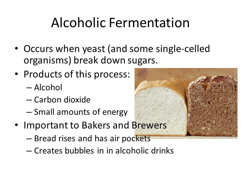 Alcoholic Fermentation Occurs when yeast (and some single-celled organisms) break down sugars. Products of this process: – Alcohol – Carbon dioxide –