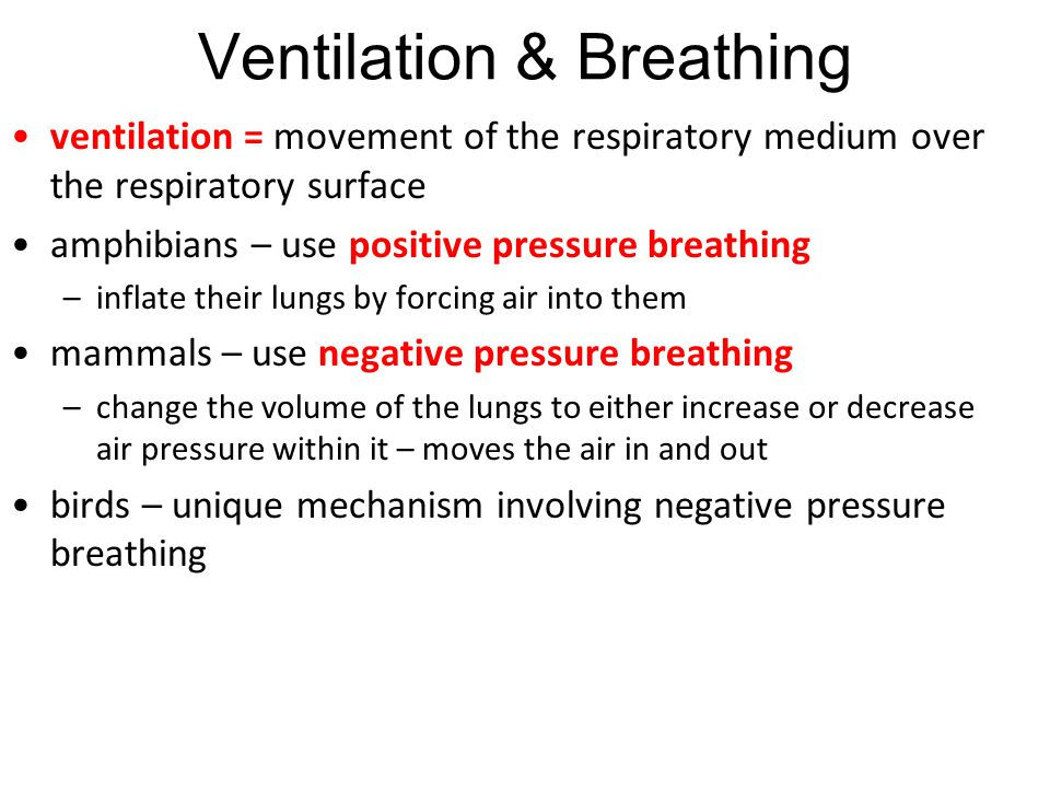 Ventilation & Breathing ventilation = movement of the respiratory medium over the respiratory surface amphibians – use positive pressure breathing –in