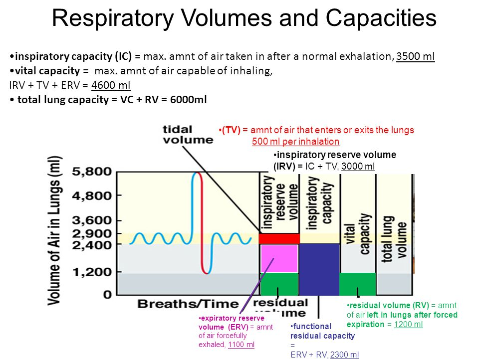 inspiratory capacity (IC) = max. amnt of air taken in after a normal exhalation, 3500 ml vital capacity = max. amnt of air capable of inhaling, IRV +