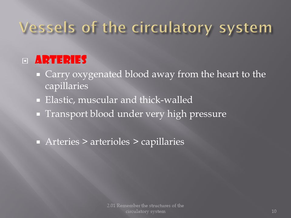  ARTERIES  Carry oxygenated blood away from the heart to the capillaries  Elastic, muscular and thick-walled  Transport blood under very high pressure  Arteries > arterioles > capillaries 2.01 Remember the structures of the circulatory system10
