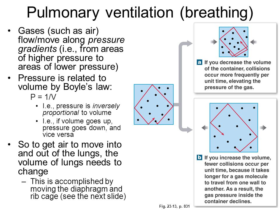 Pulmonary ventilation (breathing) Gases (such as air) flow/move along pressure gradients (i.e., from areas of higher pressure to areas of lower pressu