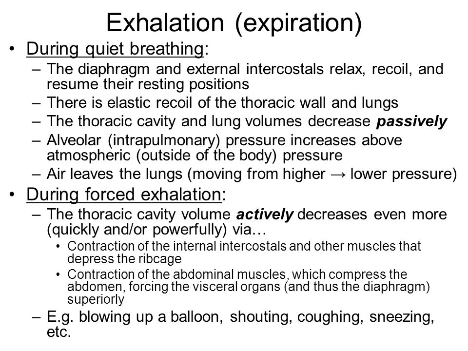 Exhalation (expiration) During quiet breathing: –The diaphragm and external intercostals relax, recoil, and resume their resting positions –There is e
