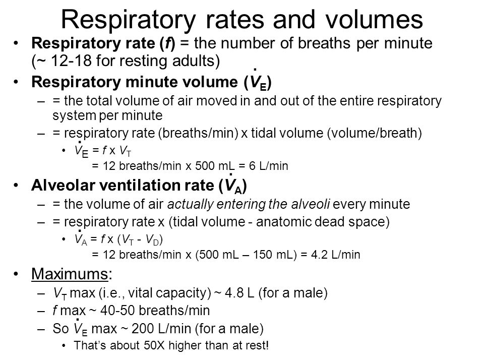 Respiratory rates and volumes Respiratory rate (f) = the number of breaths per minute (~ 12-18 for resting adults) Respiratory minute volume (V E ) –=