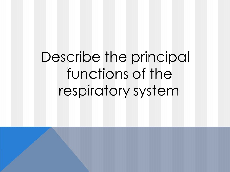 Describe the principal functions of the respiratory system.