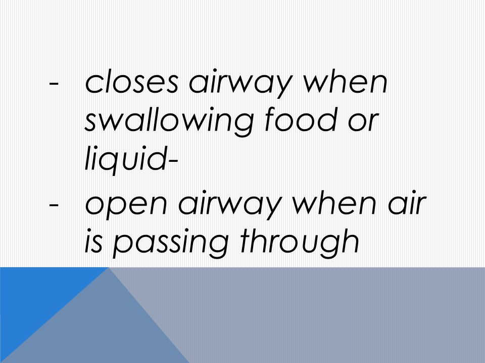 -closes airway when swallowing food or liquid- -open airway when air is passing through