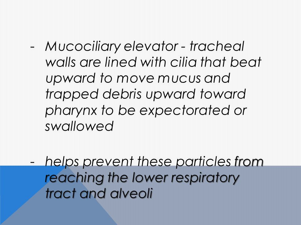 -Mucociliary elevator - tracheal walls are lined with cilia that beat upward to move mucus and trapped debris upward toward pharynx to be expectorated or swallowed from reaching the lower respiratory tract and alveoli -helps prevent these particles from reaching the lower respiratory tract and alveoli