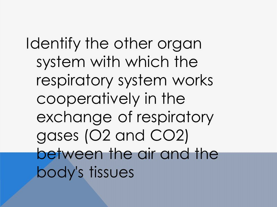 Identify the other organ system with which the respiratory system works cooperatively in the exchange of respiratory gases (O2 and CO2) between the air and the body s tissues