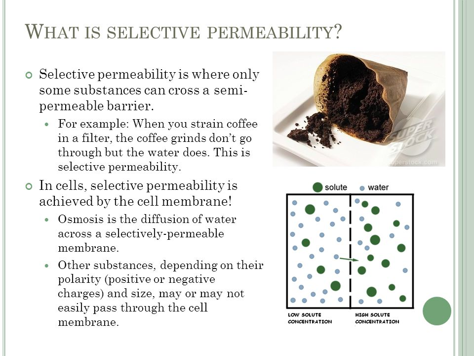 W HAT IS SELECTIVE PERMEABILITY .