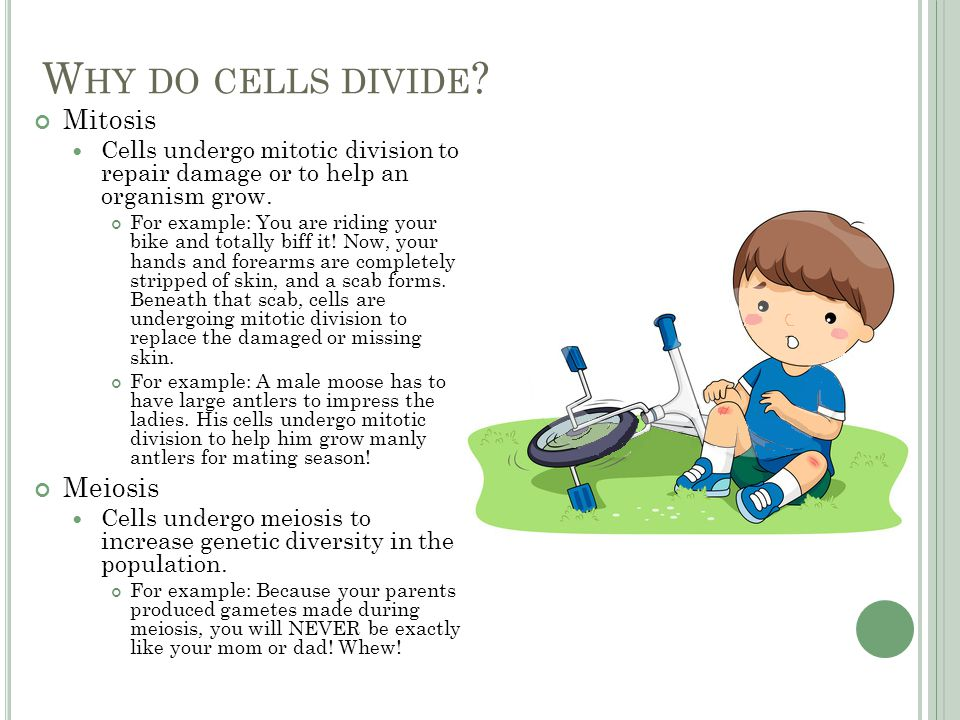 W HY DO CELLS DIVIDE .