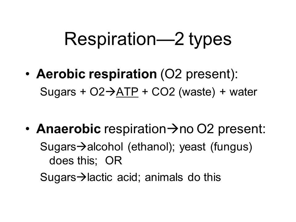 Respiration—2 types Aerobic respiration (O2 present): Sugars + O2  ATP + CO2 (waste) + water Anaerobic respiration  no O2 present: Sugars  alcohol (ethanol); yeast (fungus) does this; OR Sugars  lactic acid; animals do this