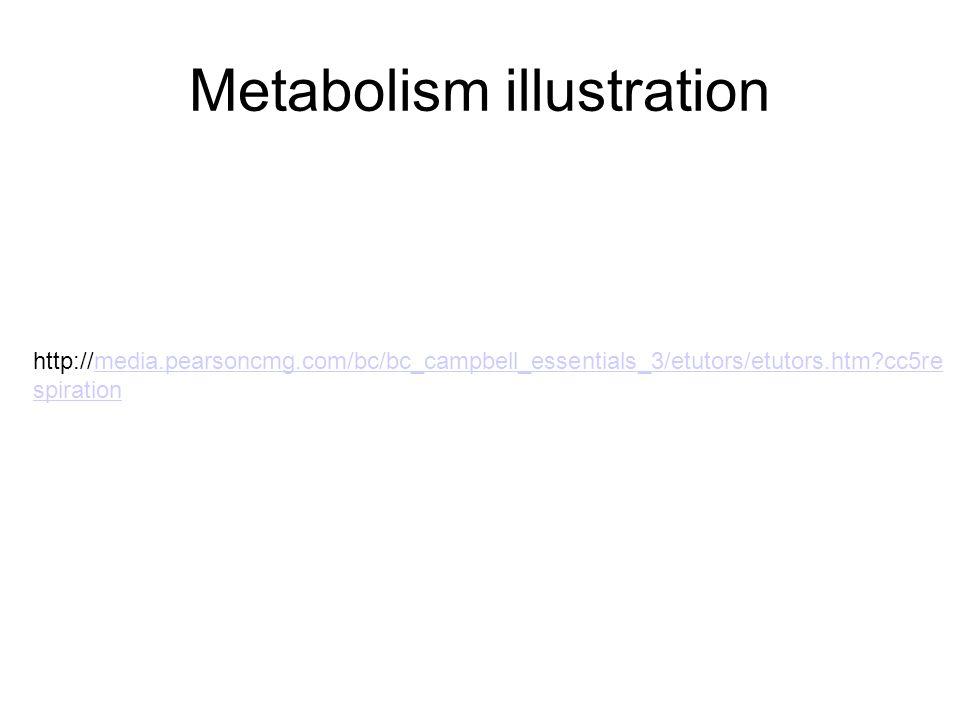 Metabolism illustration http://media.pearsoncmg.com/bc/bc_campbell_essentials_3/etutors/etutors.htm cc5re spirationmedia.pearsoncmg.com/bc/bc_campbell_essentials_3/etutors/etutors.htm cc5re spiration