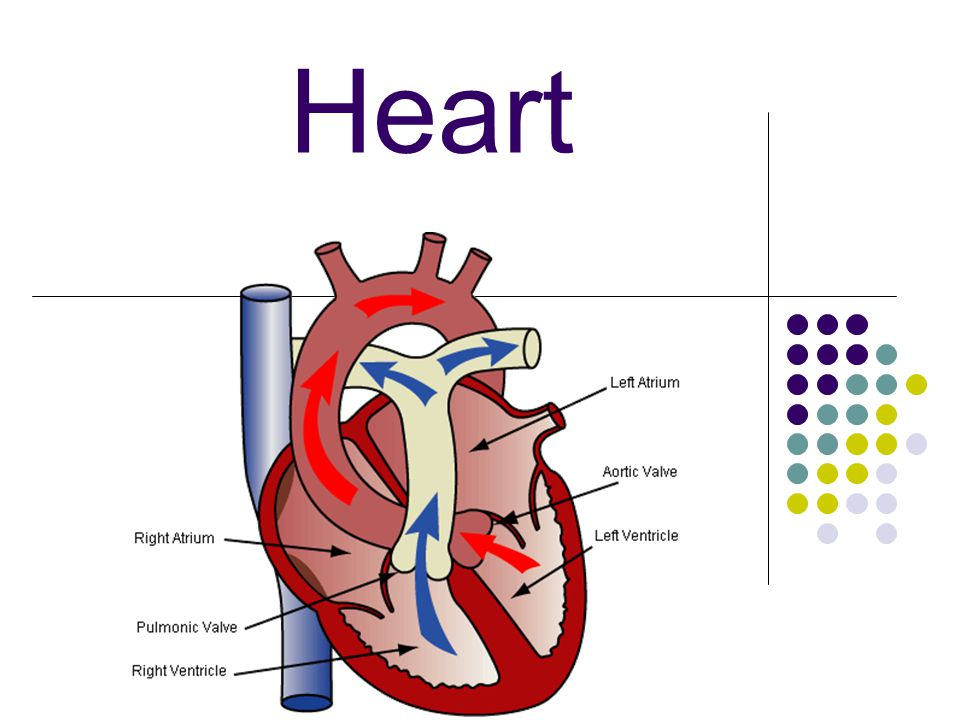 B.Target Heart Rate: Desired range of heart rate reached during aerobic exercise.