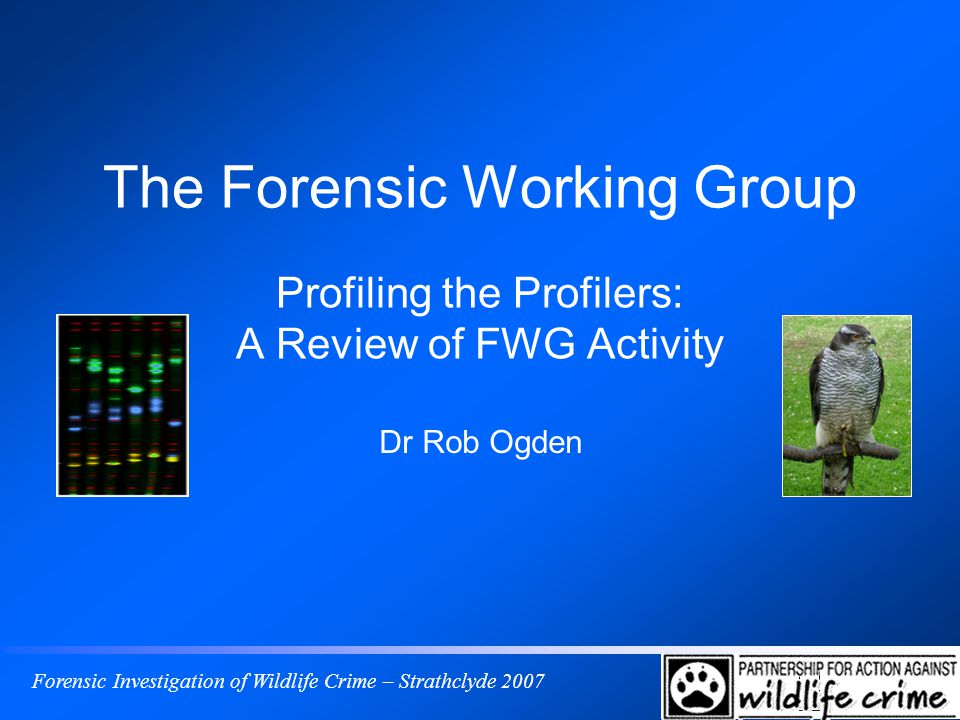 Forensic Investigation of Wildlife Crime – Strathclyde 2007 The Forensic Working Group Profiling the Profilers: A Review of FWG Activity Dr Rob Ogden