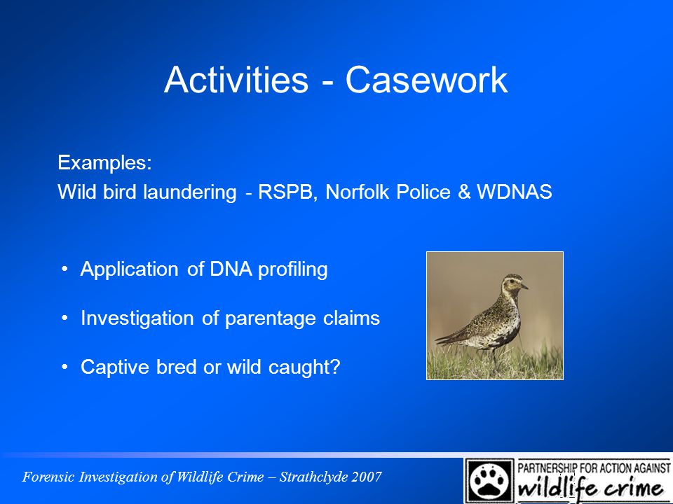 Forensic Investigation of Wildlife Crime – Strathclyde 2007 Activities - Casework Examples: Wild bird laundering - RSPB, Norfolk Police & WDNAS Application of DNA profiling Investigation of parentage claims Captive bred or wild caught