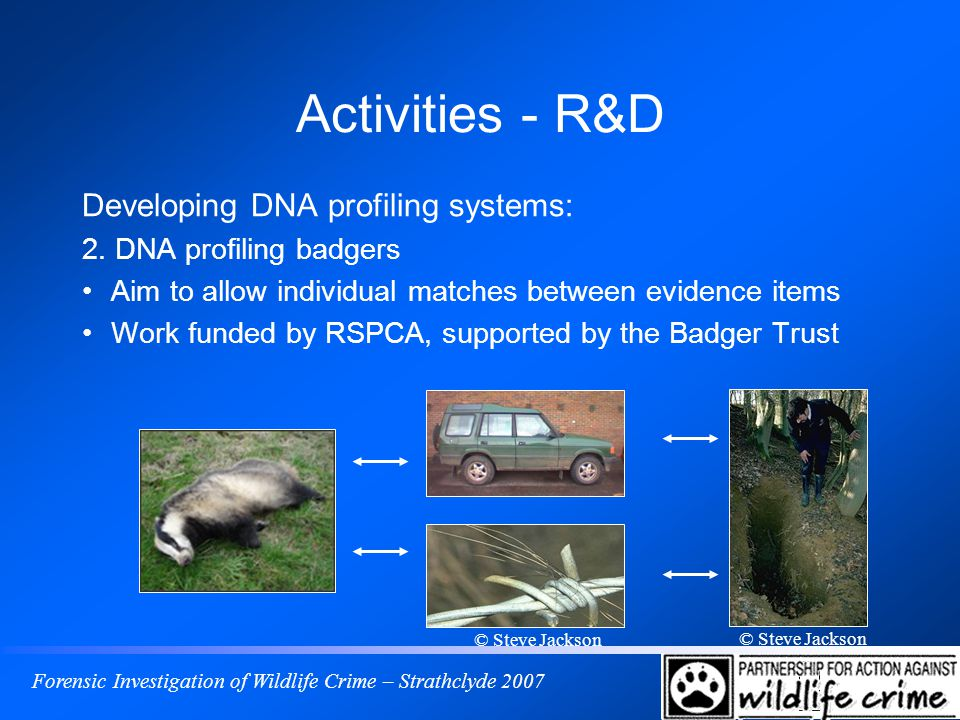 Forensic Investigation of Wildlife Crime – Strathclyde 2007 Activities - R&D Developing DNA profiling systems: 2. DNA profiling badgers Aim to allow i