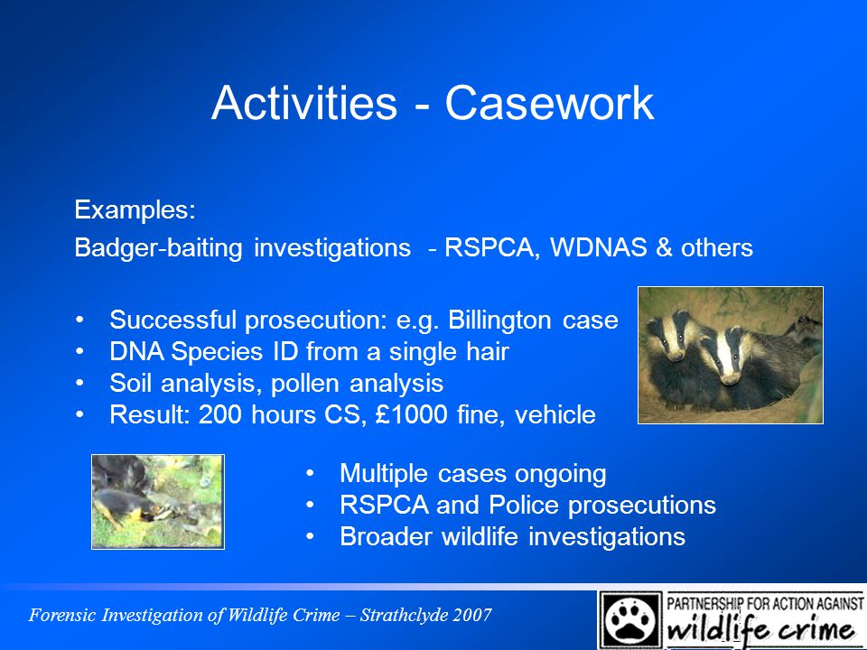 Forensic Investigation of Wildlife Crime – Strathclyde 2007 Activities - Casework Examples: Badger-baiting investigations - RSPCA, WDNAS & others Successful prosecution: e.g.